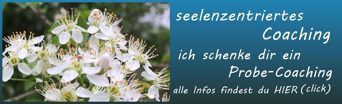 seelenzentriertes_Coaching_1