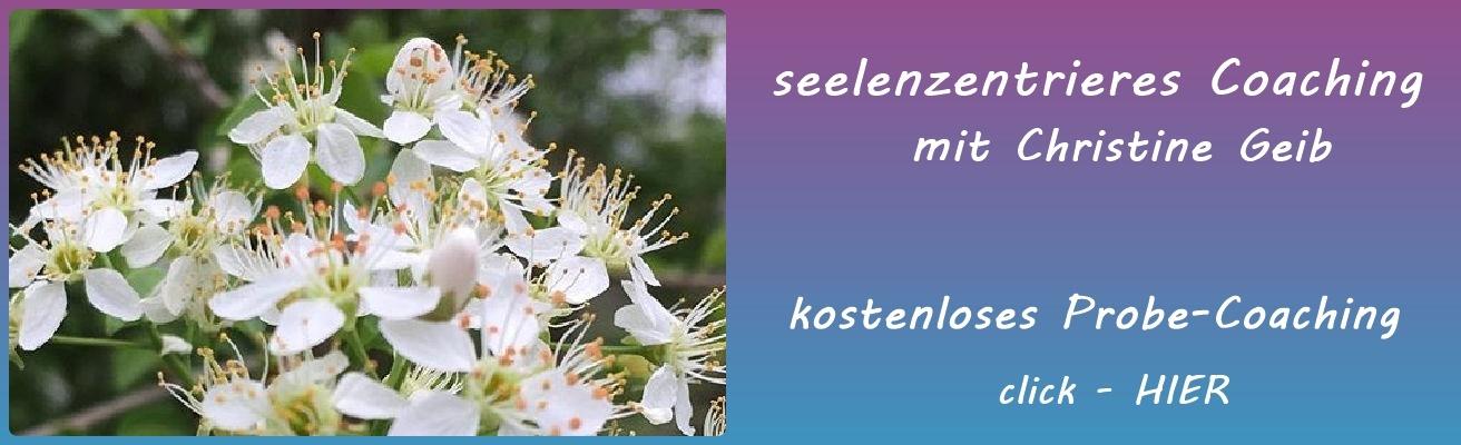 seelenzentriertes_Coaching_xx